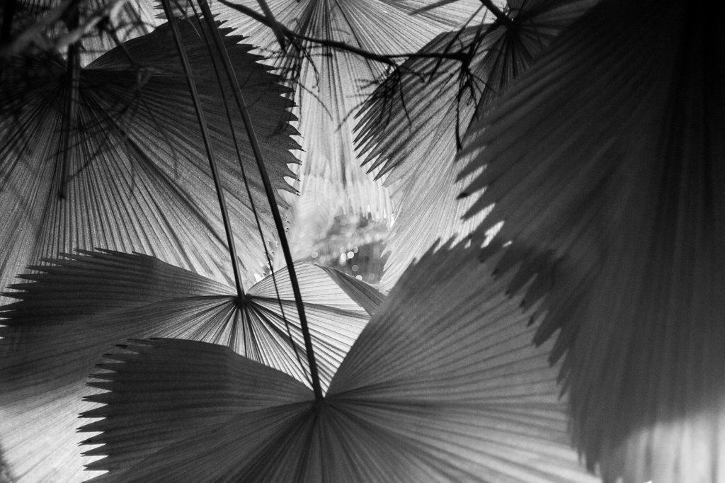 Waaiers Foto © Claudia Otten