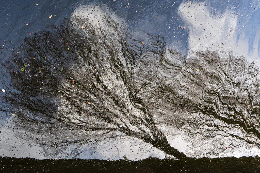 Abstracte afbeelding van bomen in het water